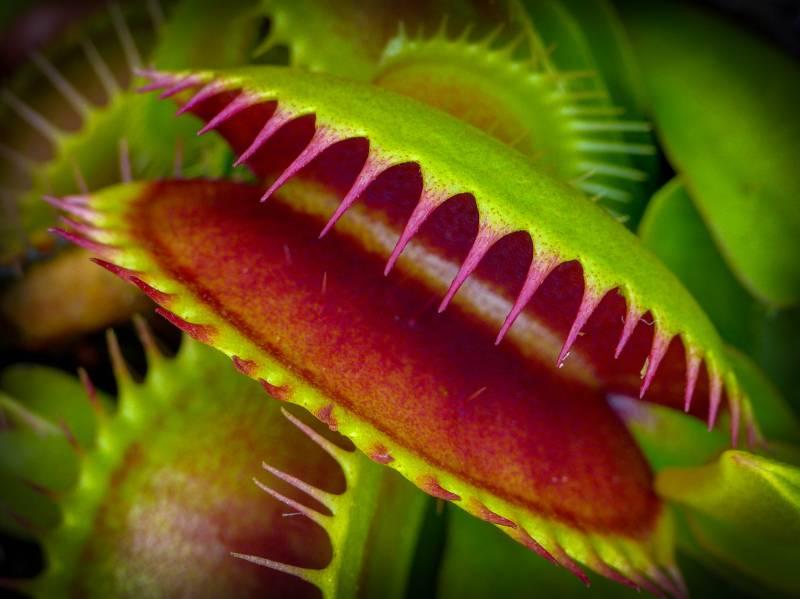 Muholovka (foto: Free the Image via visualhunt.com)