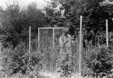 Dr. Fran Jesenko 1875 - 1932 (foto via www.botanicni-vrt.si)