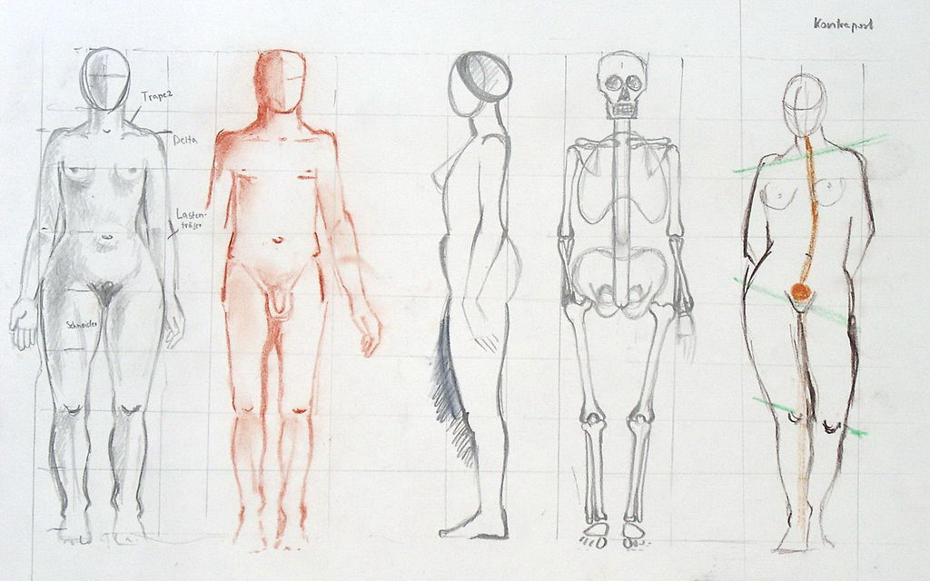 Study of human body's proportions. Artist: Ingeborg Bernhard (Schnorch). Via Wikimedia.
