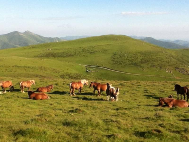 Konji z Ibize.