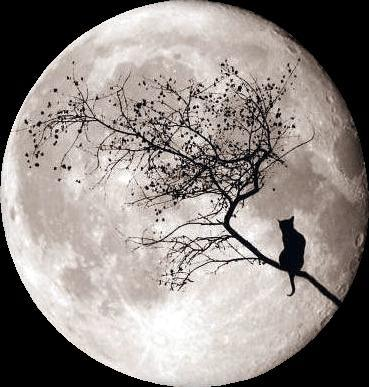 moon and cat-1