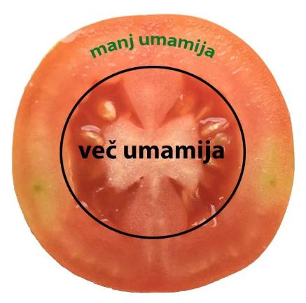 umami1