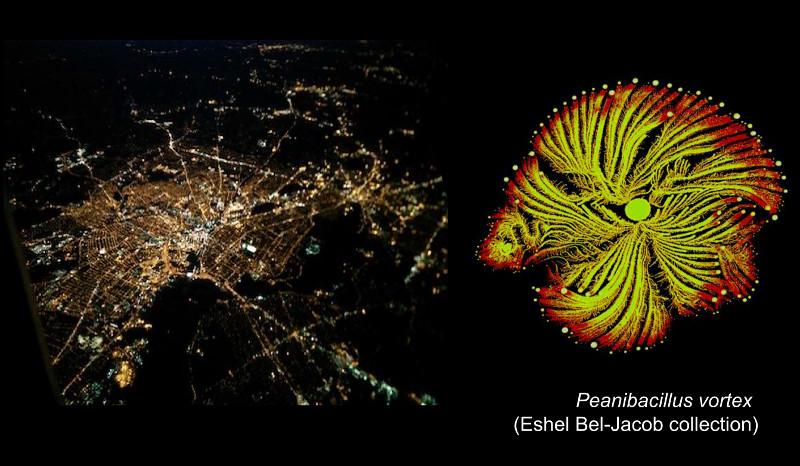 Anna primerja mesto, slikano ponoči z letala, z bakterijsko kolonijo, slikano z mikroskopom. (slika: AO)