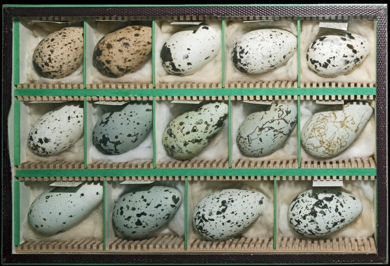 jajca ptice