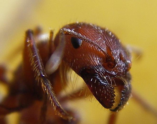 (foto: Steve Jurvetson via www.everystockphoto.com)