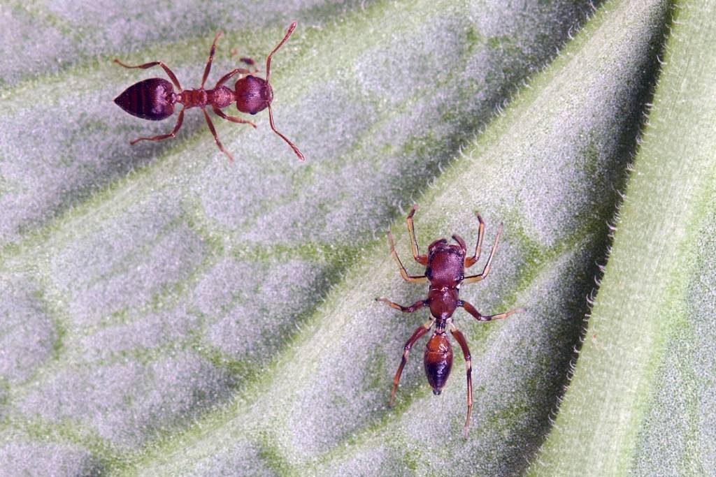 mravlja-in-pajek